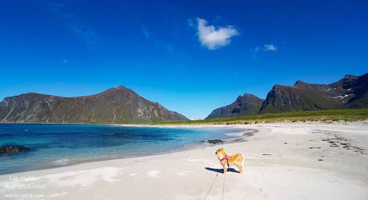 Lofoten landscape white beaches lapphund mountains fjords beautiful norway