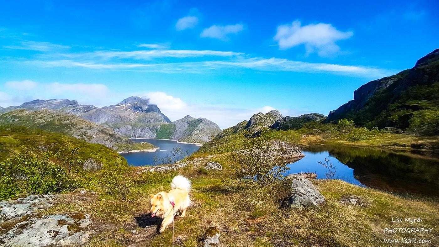 Svartvatnet lake solbjornvatnet hike Lofoten landscape easy hiking lapphund