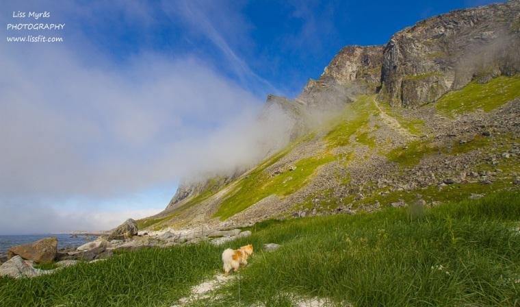 Hornneset beach fnsk lapphund Vikten sandstrand Lofoten hiking