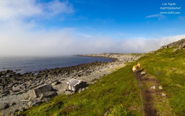Hornneset headland hiking seaside seashore vandring turglad outdoor easy Lofoten