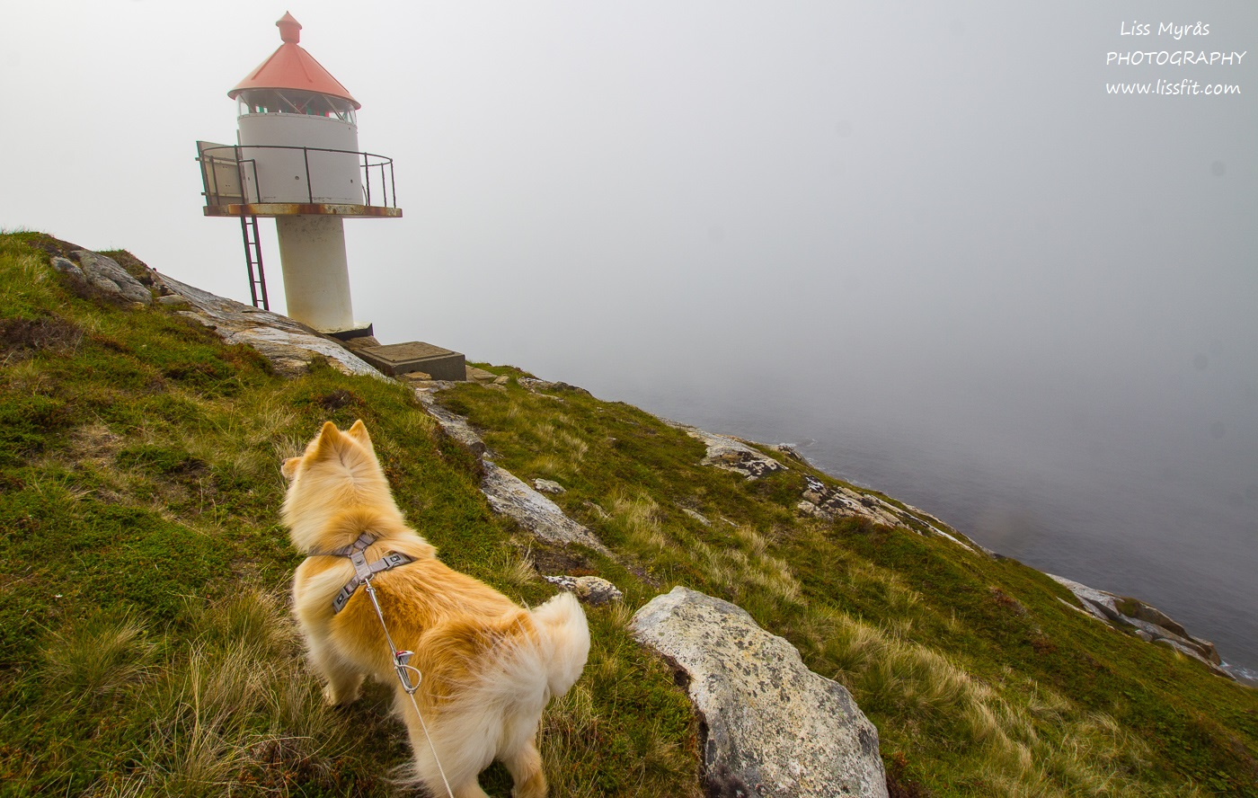 Hornneset lighthouse fyrlykt headland finsk lapphund dog hike Lofoten Norway