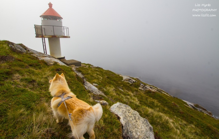 Hornneset lighthouse fyrlykt headland finsk lapphund dog hike Lofoten Norway