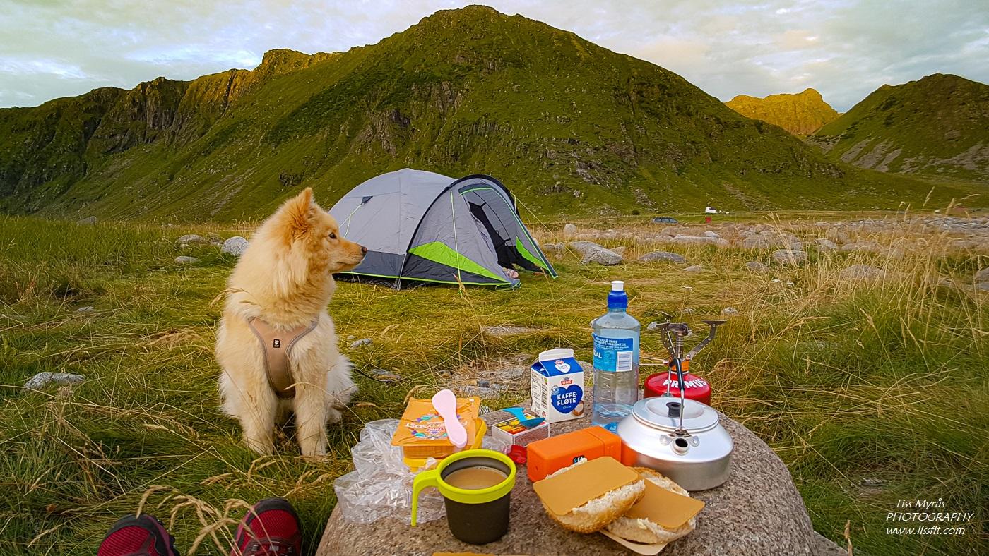 Unstad beach Lofoten telttur lapphund breakfast tent camping sunrise