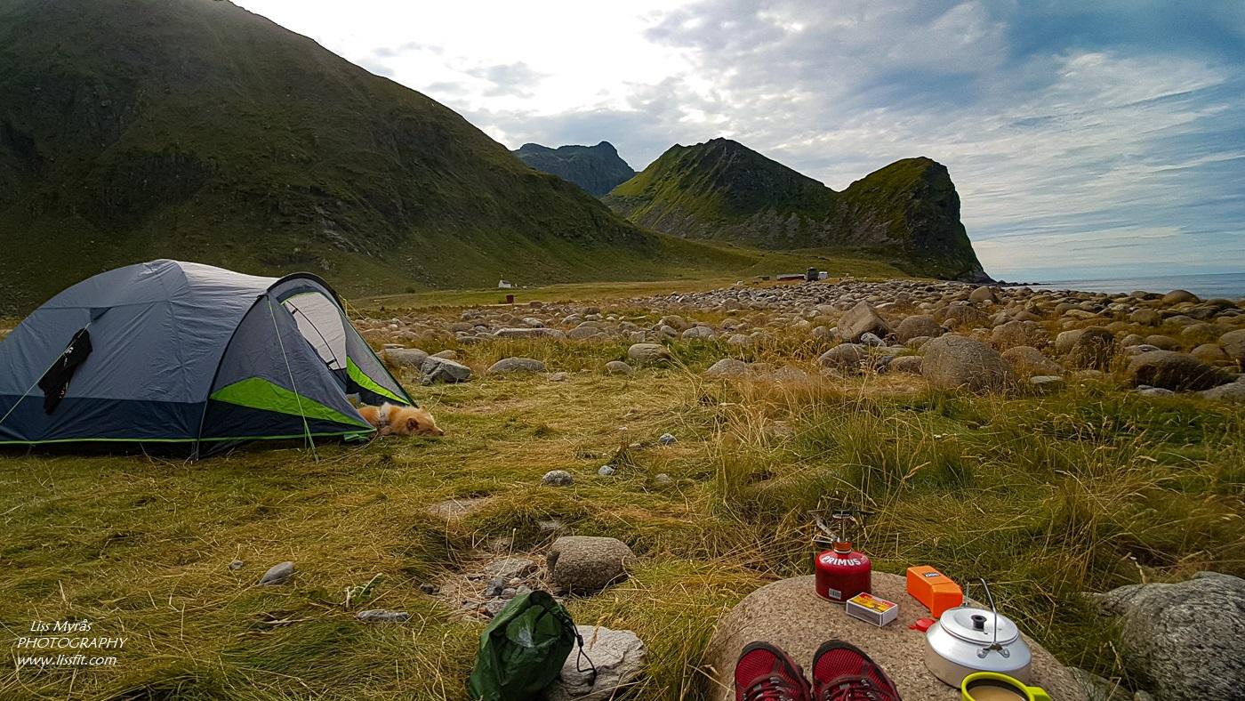 Unstad beach Lofoten telttur lapphund cosy tent camping sunrise