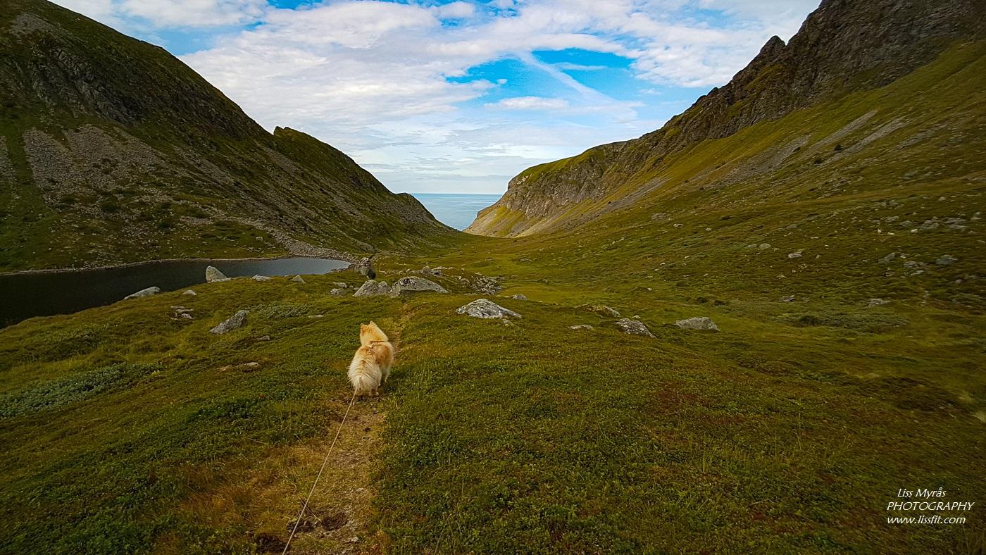 Unstad Lofoten dog hike Norddalen Norddalsvatnet