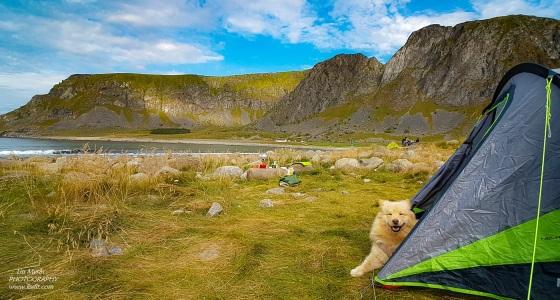 Unstad tent camping dog