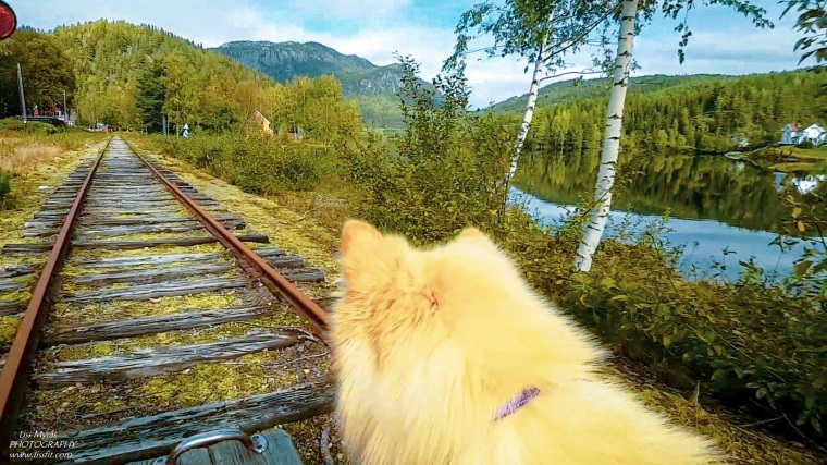 Numedalsbanen dog trip railway Veggli Norway