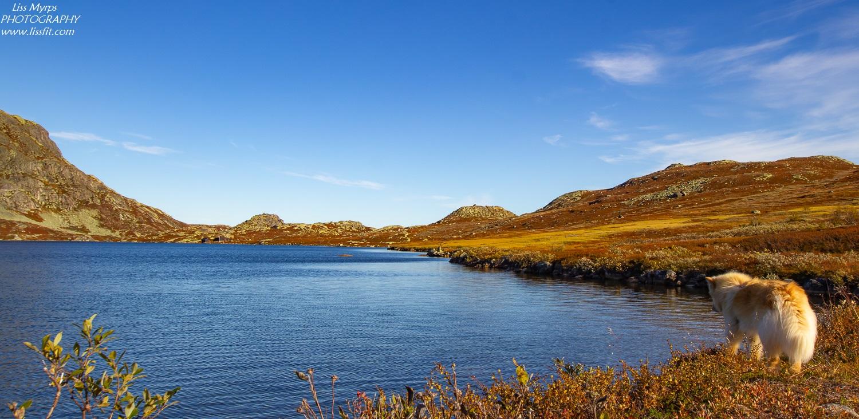 Finsk lapphund Telemark fisketur