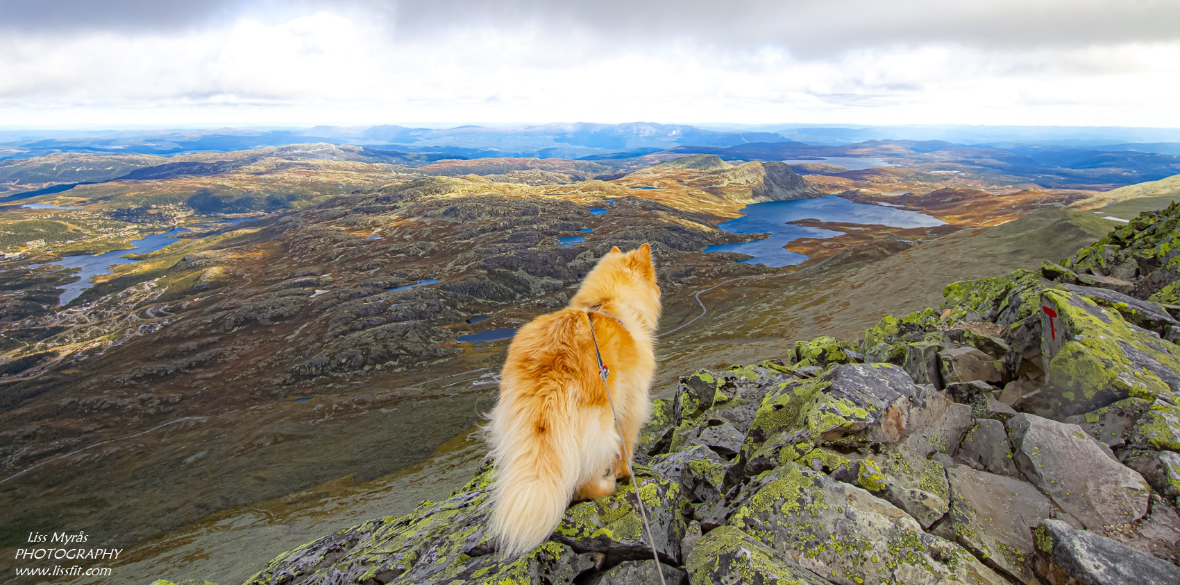 Gaustatoppen dog hike ridge