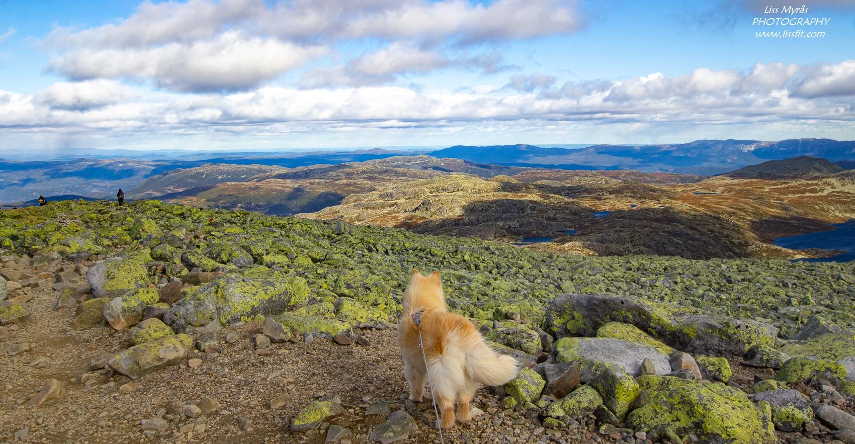 Gaustatoppen topptur hike landscape photo fjelltur lapphund dog scenic views telemark Norway