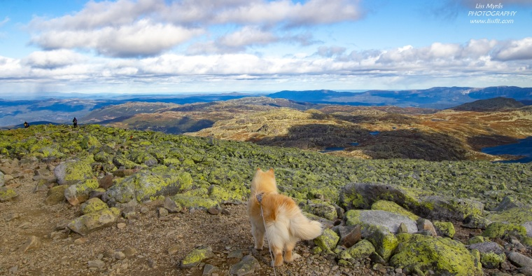 Gaustatoppen topptur hike landscape photo fjelltur lapphund dog scenic views telemark Norway