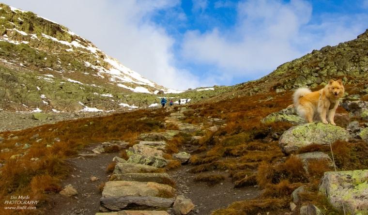Hallingskarvet Prestholtrunden sherpa stairs geilo