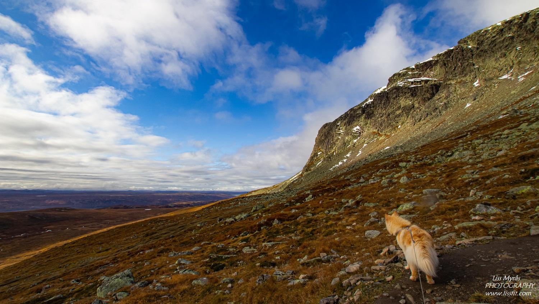 Hallingskarvet Prestholtrunden sherpa stairs geilo trail view