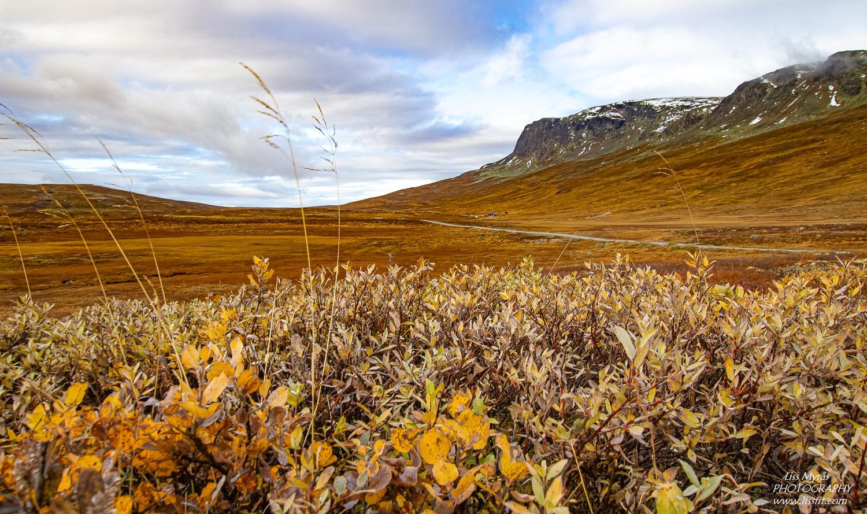 Hallingskarvet prestholtseter landscape autumn hike Geilo outdoor friluftsliv Norway