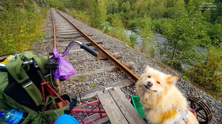 Numedalsbanen Numedal Line rail