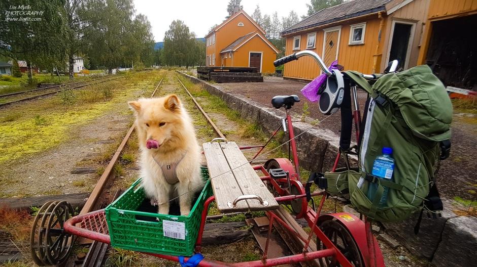 Numedalsbanen Veggli station draisine lapphund dog
