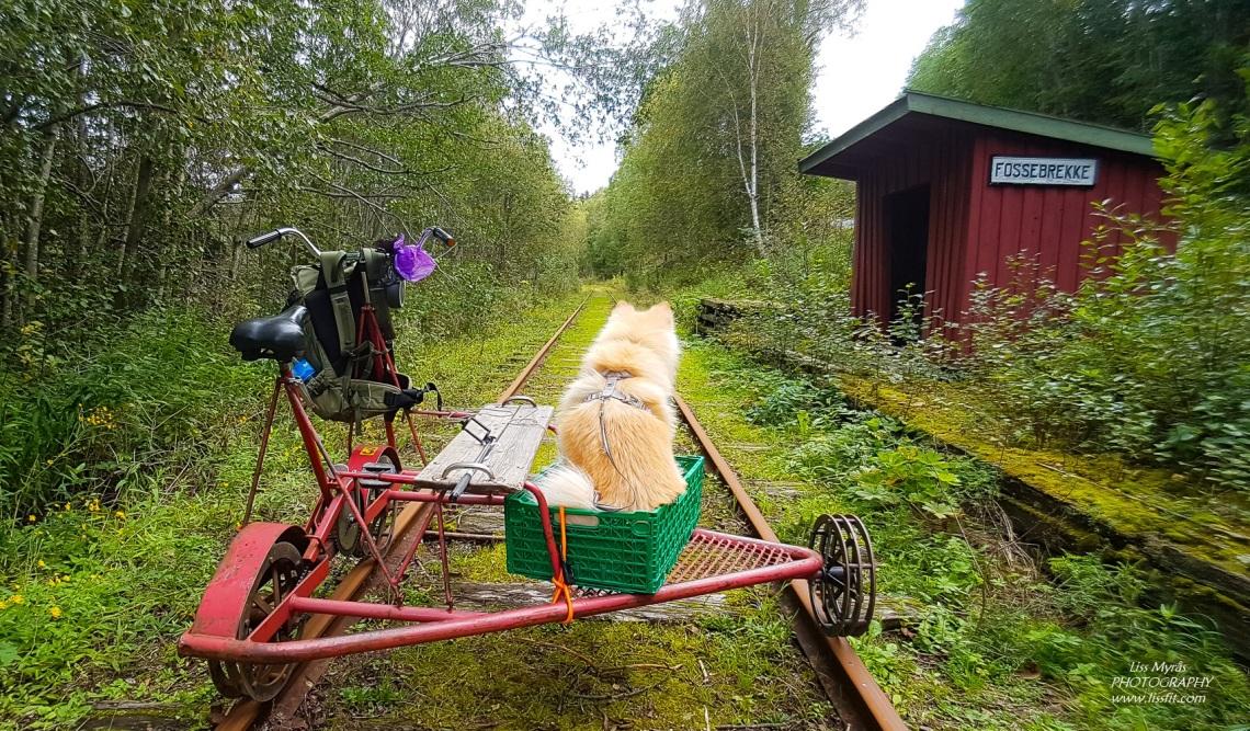 Numedalsbanen finsk lapphund railway draisine rail biking fossebrekke