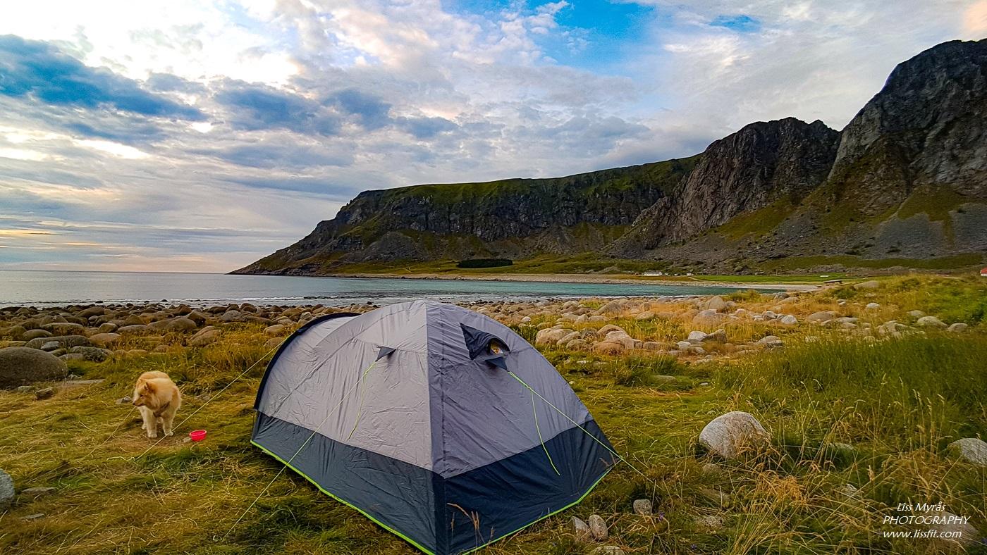 Unstad beach Lofoten telttur outdoor norsk natur lapphund tent camping sunset