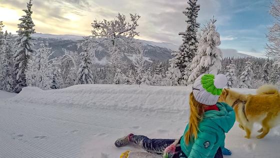 winter wonderland telemark lapphund downhill bob aketur vinterland
